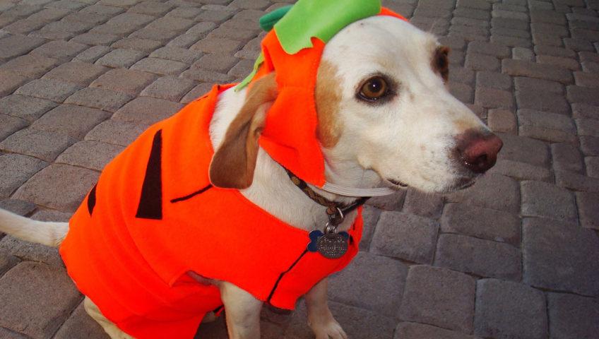 Durrow Scarecrow Festival - Fancy Dress Dog Show